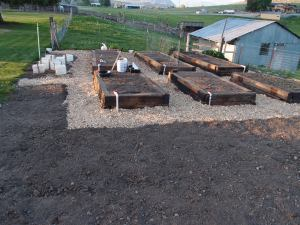 Finished beds, ready to plant.  The area to the left where the white boxes are will be for tomatoes and peppers.  The bare dirt on the left and up front is for corn.